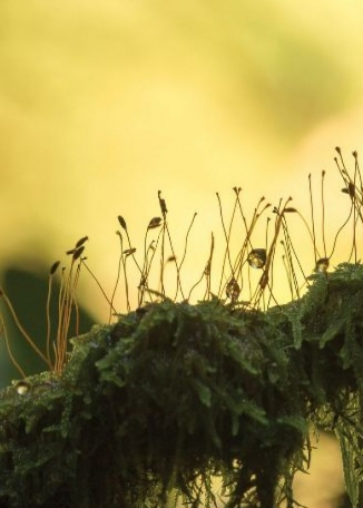 JAMES MERRILEES Nature's Lamp Posts
