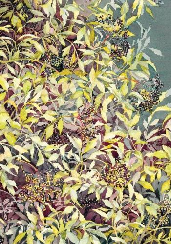JACKIE HENDERSON Elderberry