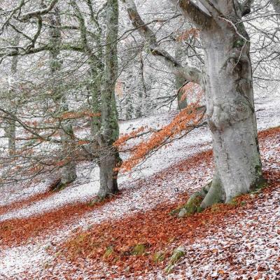 THE BRITISH WILDLIFE PHOTOGRAPHY AWARDS