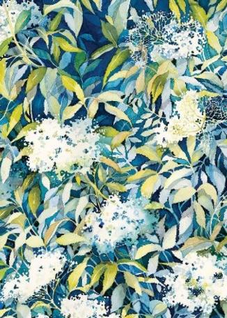 JACKIE HENDERSON Elderflower