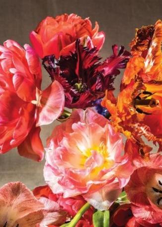 KATHERINE WELLS - Somerset Tulips