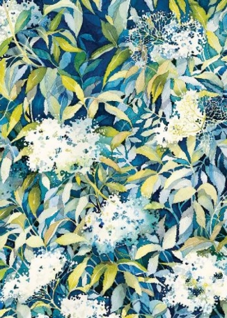 JACKIE HENDERSON Elderflower
