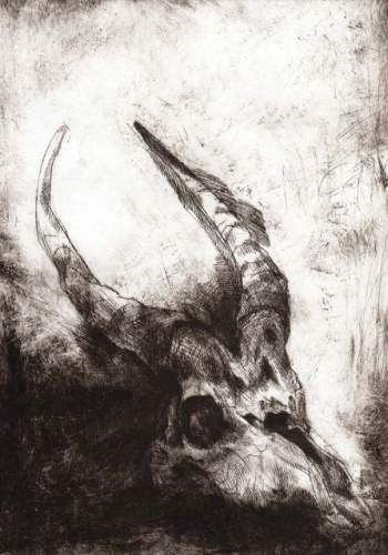 NOAH WARNES - Skull Series - 1