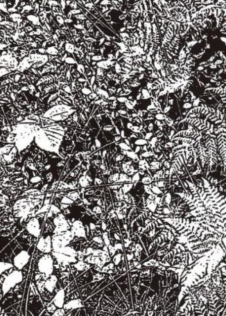 JENNY GRAHAM - Tapestry 2